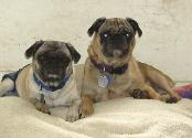Tululla & Moon Doggie
