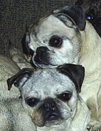 Trooper & Lilly